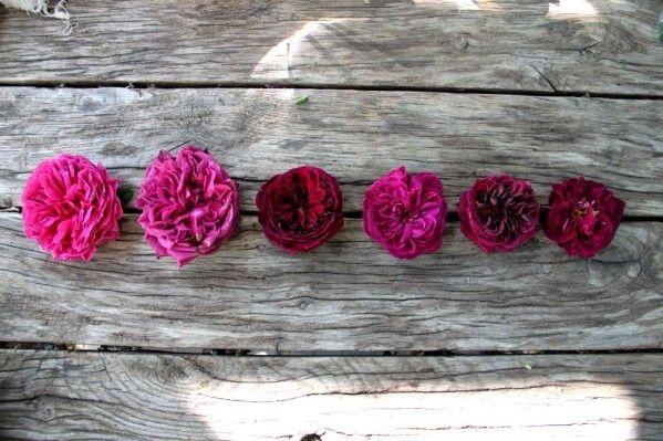 Les 236 meilleures images du tableau roses sur pinterest for Jardin shakespeare 2015