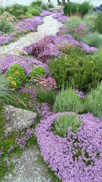 Purple thyme with lavender, pine, and blanket flower amid clumps of iris and ceanothus create the border for a round rock path leading to the beach, patio and fire pit.