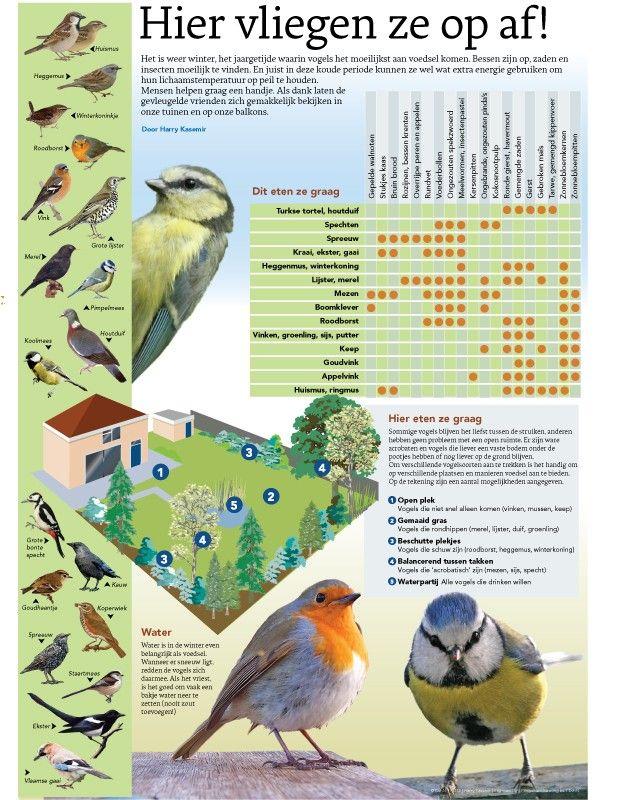 vogels voeren - Google zoeken