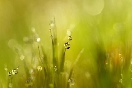 Photography: Sunshine Moss by Sharon Johnstone