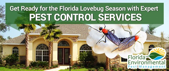 26 Best Pest Control Information Images On Pinterest Pest Control Garden Pests And Insects