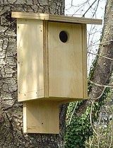 Basic kits are easy for anyone to build a bird house.