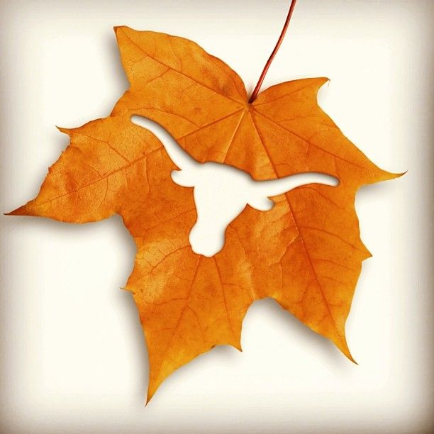 Happy Fall, y'all. Burnt orange, Longhorn leaf. #hookem #UT