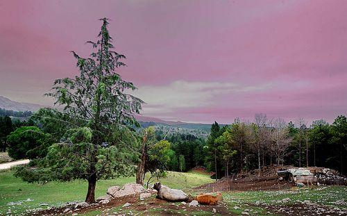 Landscape. Paisaje. Villa Andina. Cordoba ARgentina