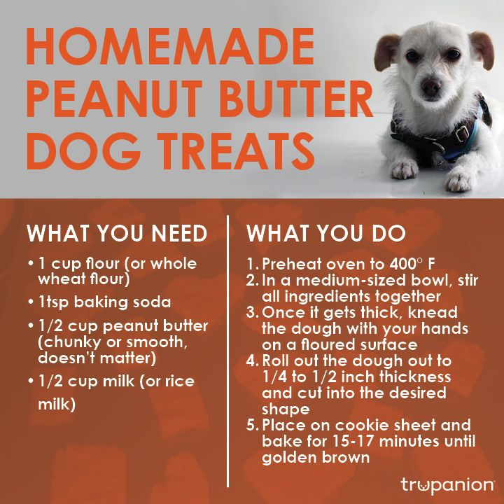 Homemade Peanut Butter Dog Treats - quick and easy recipe from Trupanion