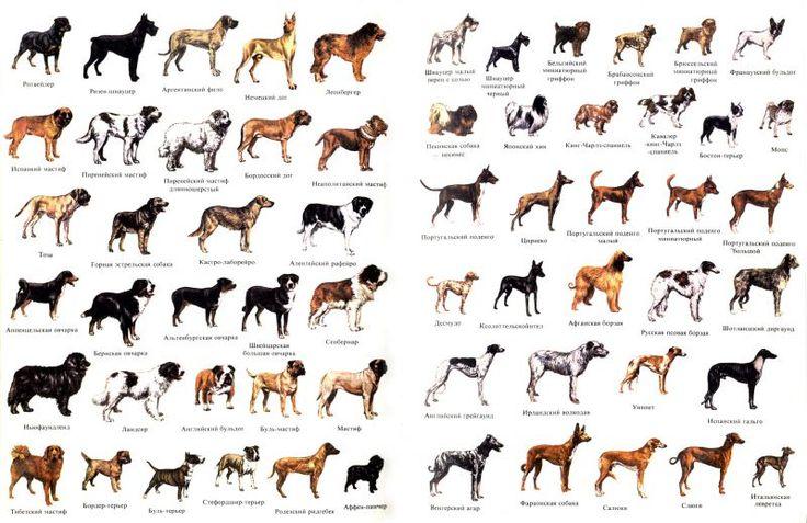 Видео пород собак и их разновидностей