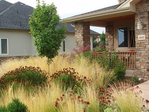 23 best xeriscape images on pinterest landscaping ideas. Black Bedroom Furniture Sets. Home Design Ideas