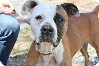 Merriam Dog Adoption