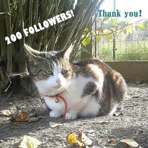 WOOHOO! Got my 200th follower this night! I usually don't like red cats (haha) but hey this is one cutiepie and he's my 200th follower! Give him a few likes or a follow. Thanks @ _________________________________ WOEHOE! Ik stond op met 200 volgers op de teller! Normaal hou ik niet zo van rosse katten (haha) maar deze hier is een schatje én hij was mijn 200ste volger! Geef hem wat likes of volg hem. Bedankt @ _________________________________ #cats #cat #catstagram #catsofinstagram…