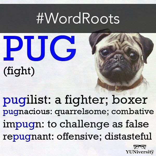 """If you want to improve your vocabulary in 2017 one effective way is to study word roots e.g. """"pug"""" (fight). Check our Instagram and Twitter feeds for updates throughout the year. Just learning the handful of example words that appear in these images will make a dramatic impact.     #vocabulary #latin #wordroot #greek #english #test prep"""