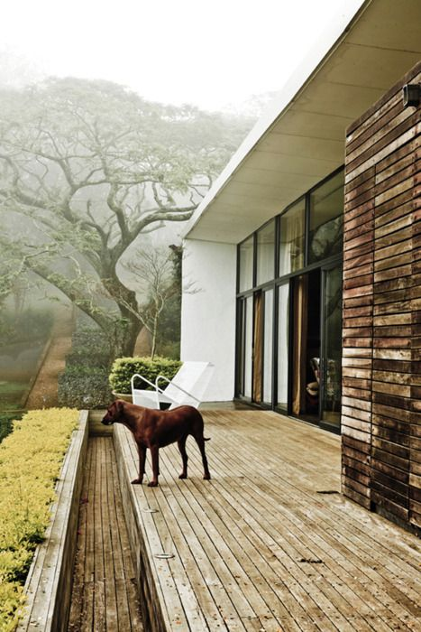 infatuated by that tree in the background: Wooden Patio, Dogs, Drop Anchors, South Africa, House, Backyard, Outdoor Spaces, Back Decks, Mornings