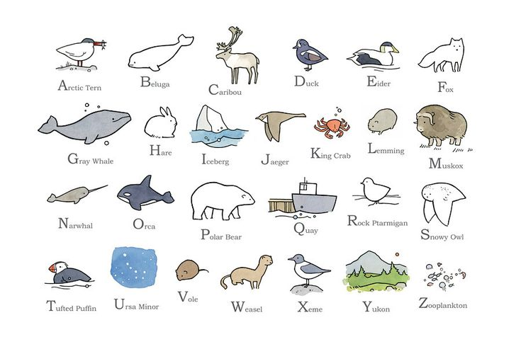 Illustrated Alphabet - Arctic North - 13x19 Nursery Art. $45.00, by Studiotuesday.
