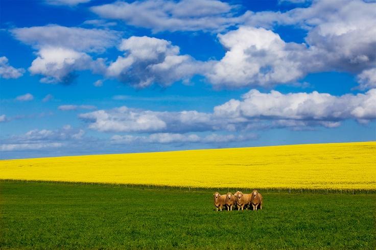 Spring in Caledon Area, Overberg