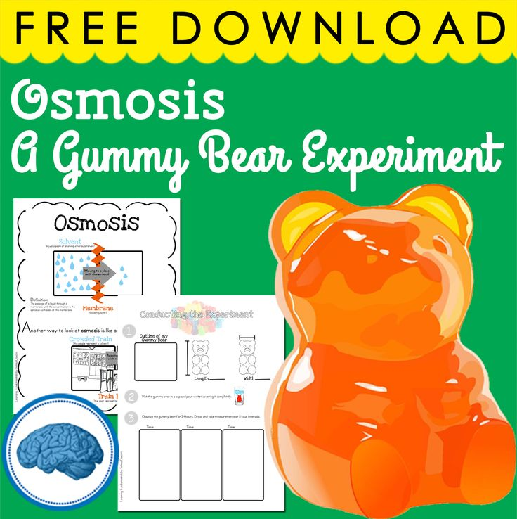 Gummy Bear Science Experiment - Osmosis #scienceforkids #osmosis