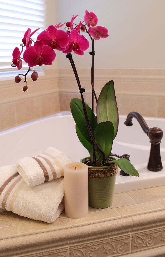 deep purple orchid brings life to bathroom: day orchid decor