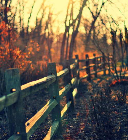A fanciful fence: Things Autumn, Life Is Beautiful, Autumn Leaves, Autumn Fence, Autumn Fall, Favorite Seasons, Wooden Fence, Fall Weather, Autumn Stuff