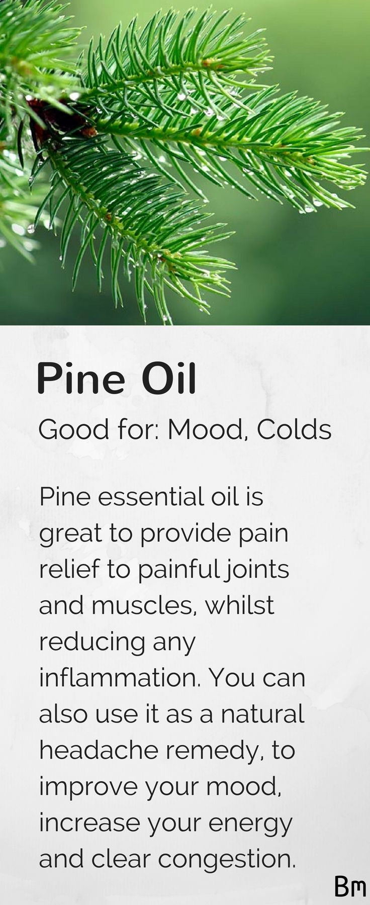 Pine essential oil reduces inflammation, eases painful joints, works as a natural headache remedy, improves your mood, increases energy levels and clears congestion. Diffuse this oil in an oil diffuser to improve your mood and energy levels or add it to your favourite lotion and massage it into any joints to relieve pain. Learn more about pine and other essential oils in this complete guide by clicking on the pin above! :)