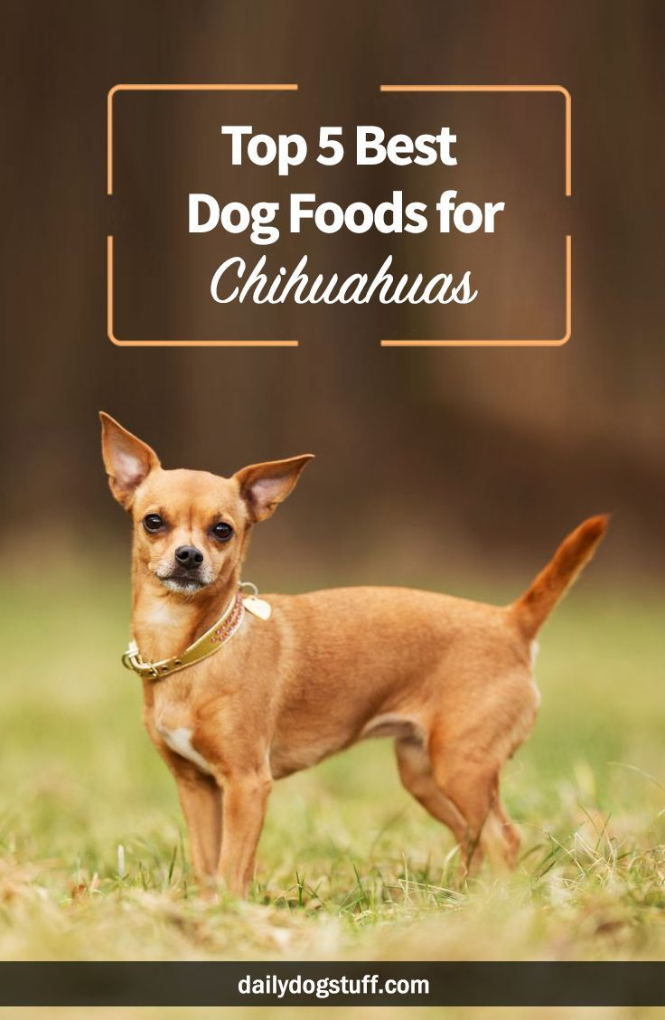 Top 5 Best Dog Foods for Chihuahuas via @dailydogstuff