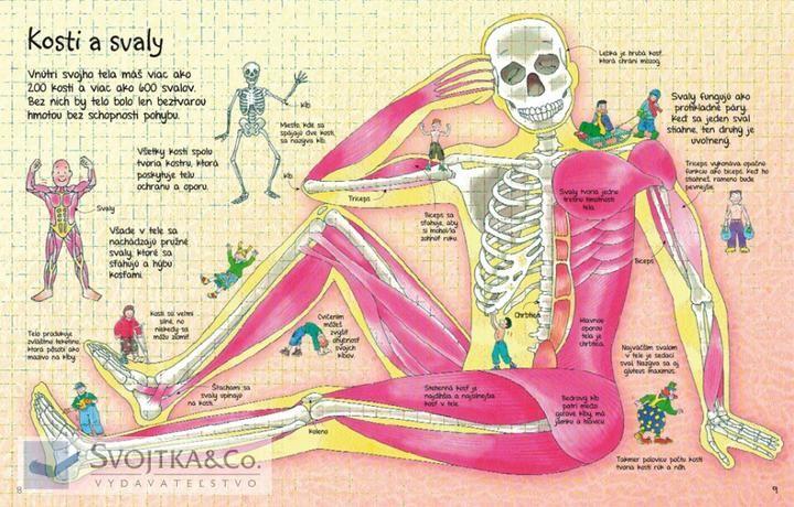 Ľudské telo a zdravie - Album používateľky mery333 | Modrykonik.sk