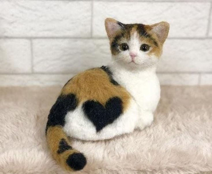 Lovely Kitty – Cute Cats