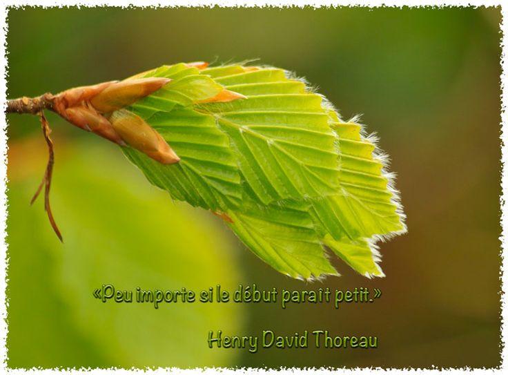 citation de Henry david Thoreau