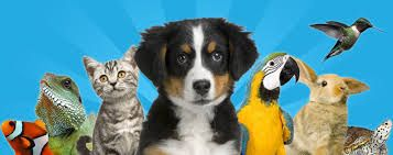 If you own a pet and you're not satisfied with the kind of the inventory available at the local store. Then, you must buy pet products online that are available online.
