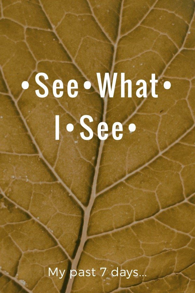 My past 7 days... •See•What• I•See• Friday Saturday Sunday Monday Tuesday Wednesday Thursday Do you #seewhatisee?