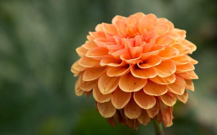 Nowy wymiar florystyki www.florysta3d.pl