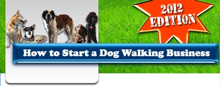 How Can A Kid Start A Dog Walking Business