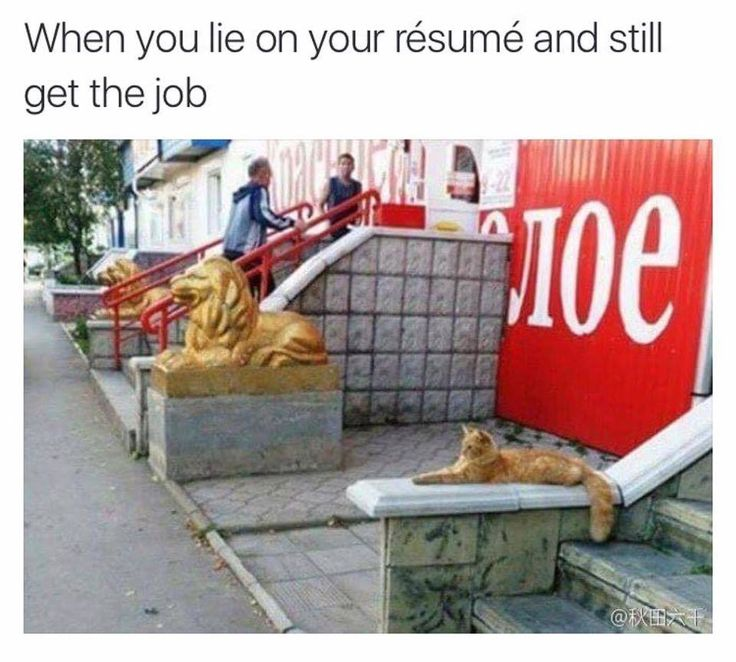 392 best cats images on Pinterest Kittens, Kitty cats and Baby - lying on resume