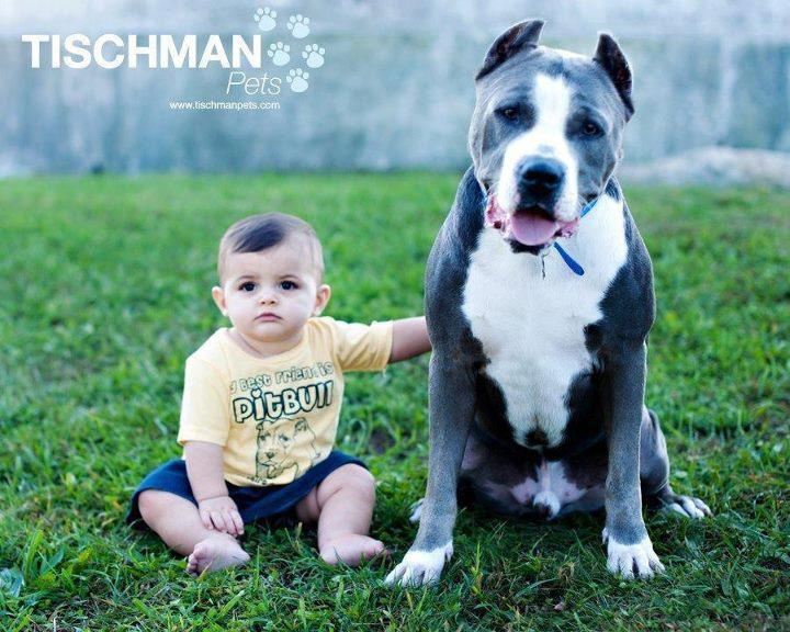 Best ADORABLE DOGS Design Bump Images On Pinterest American - Meet hulk possibly worlds biggest pitbull still growing