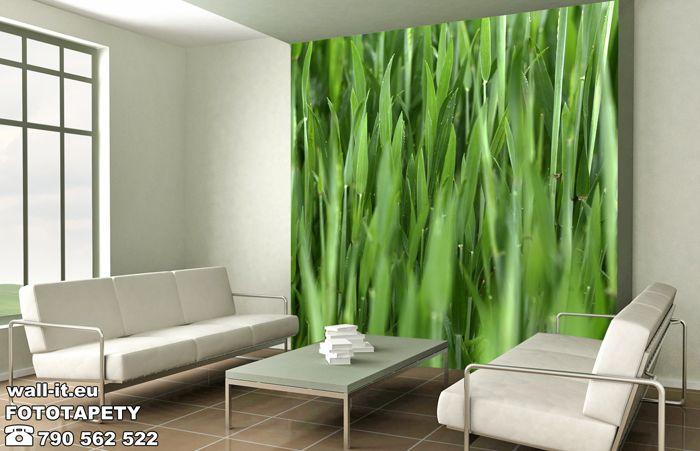 Fototapety do salonu - zielona trawa. http://www.wall-it.eu/product/photowallpapers/natura/fototapety-z-trawa.jpg #fototapeta #fototapety #mural #murals #trawa #grass #green #zielony #salon #pokoj #pokojdzienny #livingroom #room #fresh #producent #wallit