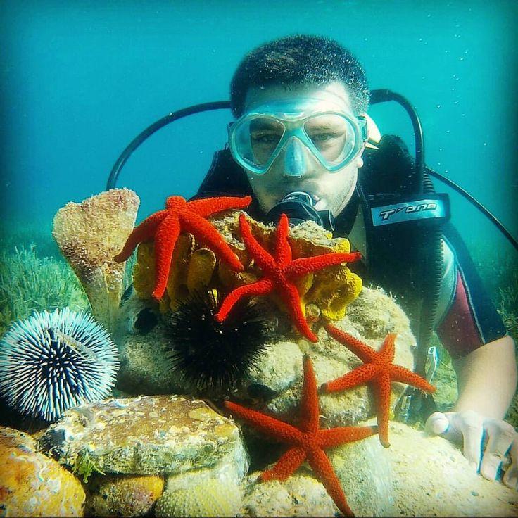 www.ayvalik3sea.com #ayvalik3sea #dalismerkezi #scuba #ayvalik #cunda #ayvalikdalis #daliskursu #denemedalisi #koraygerce #denizyildizi #diving #daliszamani (Ayvalik 3 sea dalış merkezi)