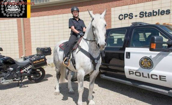 Calgary Police Service welcomes new horse Juno to Mounted Unit