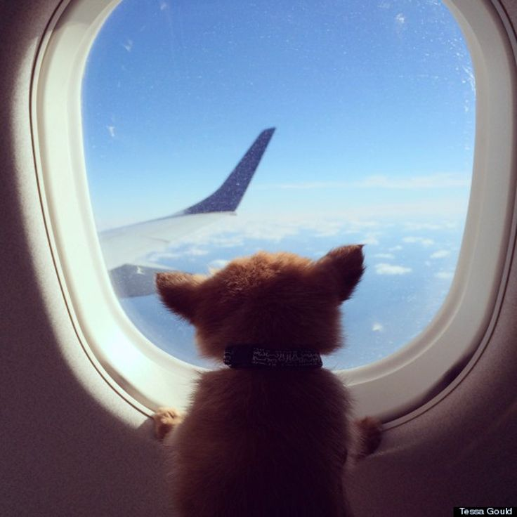 The Top 26 Pet-Friendly Airlines