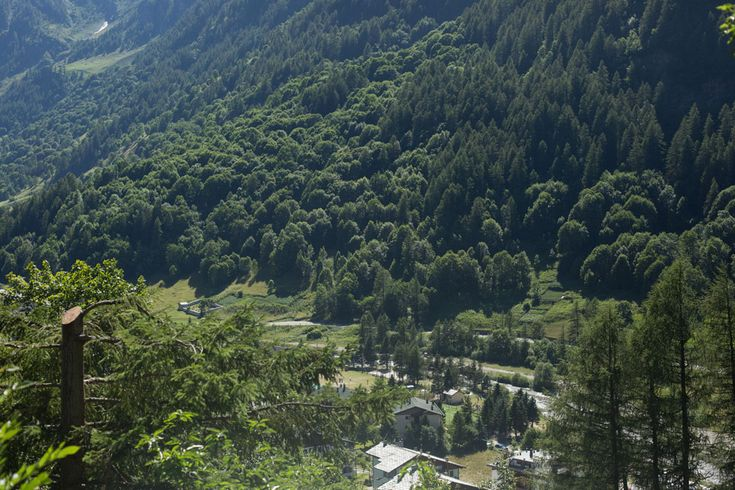 Prali Italy Samantha De Reviziis the meadows and pine forests of Prali