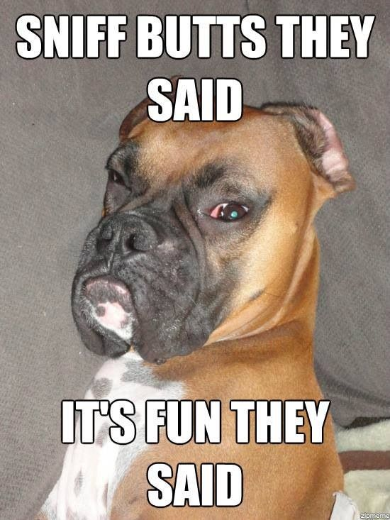 Funny Boxer Dog Meme : Pin by teresa coats on i love boxer dogs pinterest