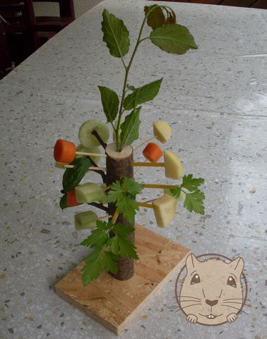 Fun & Food for Gerbils  the rabbits might like this also Good idea! Got to try this with my gerbil!