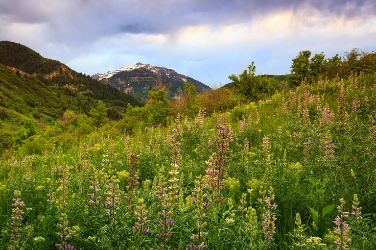 2. Provo, Utah Population:114,804 Nearby state parks:8 Nearby…