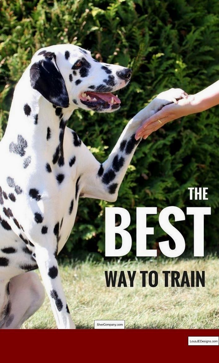 Training Techniques For Hunting Dogs And Pics Of How To Train Your
