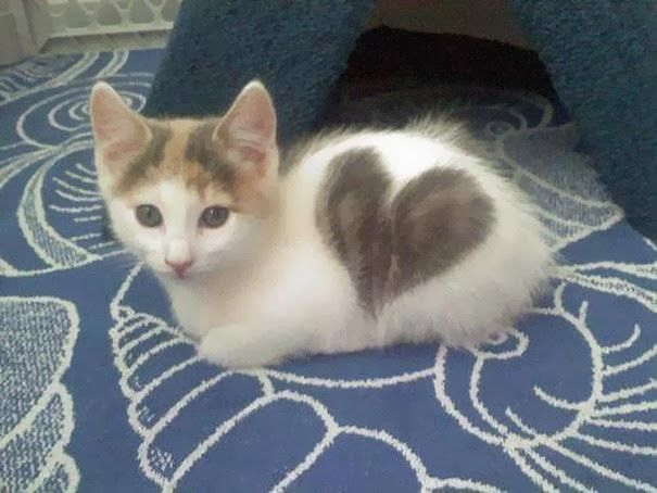 5 Pets with strange and Amazing Markings, cute and amazing pets :)