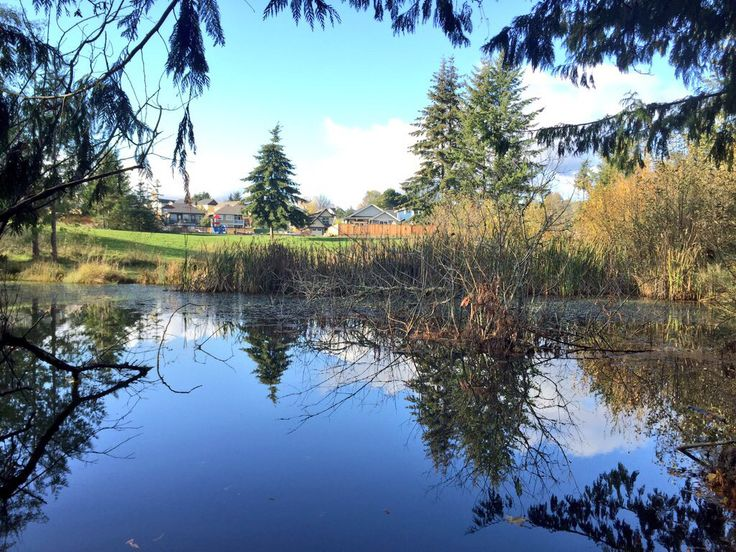 Reflections in the pond at Woodland Creek Park, Sooke