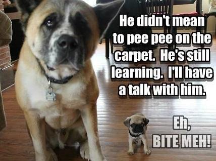 Funny pug dog meme puns squishy faces pinterest funny pugs dog