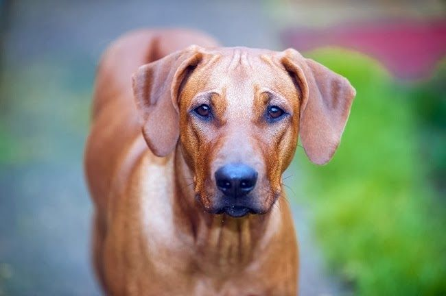 Zapalenie zatok u psów