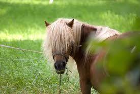 A blondie, just like me!