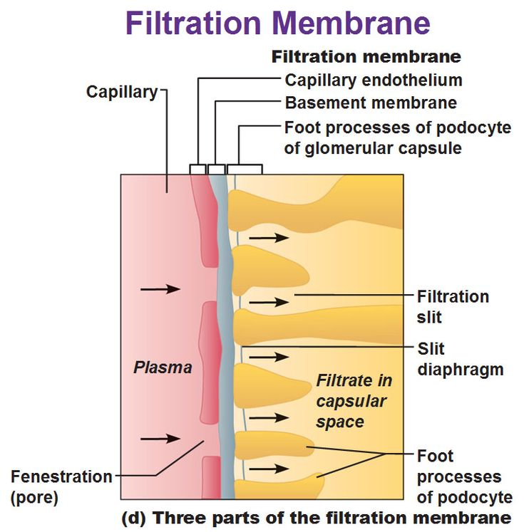 best 20 basement membrane ideas on pinterest wet basement solutions