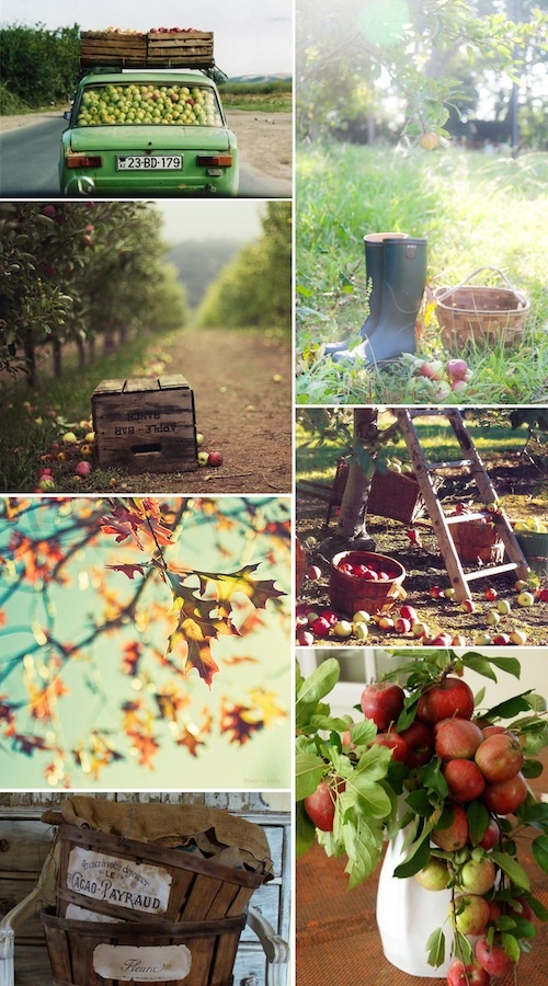 Apple Picking - I lived in WA... home of WA Apples! & I never went apple picking in the Fall :-/