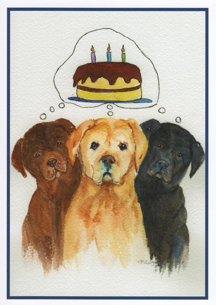 24 best Birthday Cards images – Labrador Birthday Cards