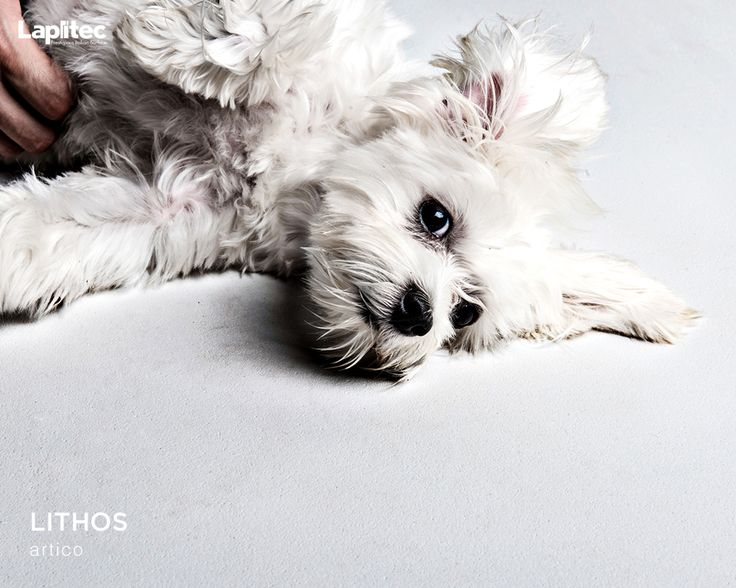 Keep clean with your best friend. Lapitec® surfaces are antibacterial and can handle any amount of playtime.