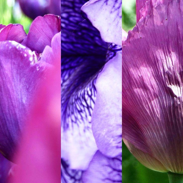 #写真 #花 #flower #ファインダー越しの私の世界 Akiko Nishijima(@AkikoNisijima)さん   Twitterの画像/動画